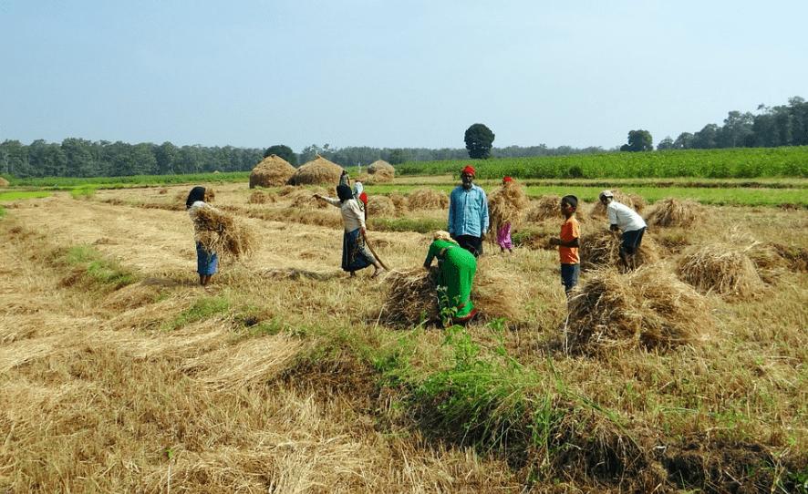 धान की खेती कैसे करें dhan ki kheti kaise kare