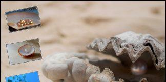 मोती की खेती कैसे होती है moti ki kheti kaise kare