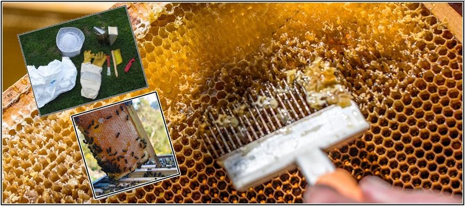 अच्छी आमदनी के लिए मधुमखी पालन करना about Bee keeping In Hindi