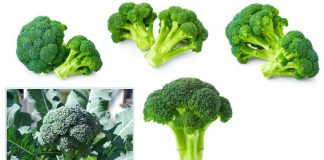 Sprouting Broccoli cultivation in india